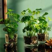 北歐模擬綠植假草盆栽簡約家居小清新客廳擺件裝飾品玻璃花瓶盆景 交換禮物