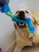 大號彈力繩結球玩具寵物互動耐咬橡膠磨牙棉繩拉布拉多金毛狗咬膠