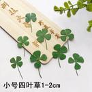 四葉草標本 幸運草滴膠乾花DIY押花材料,1-2公分12朵