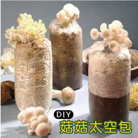 栽種樂 菇菇 太空包+外盒 DIY 3組免運