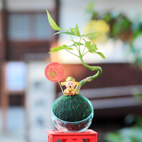 【迎光】開運財神發財樹