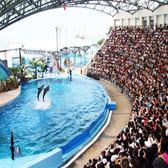 【花蓮】海洋公園 - 學生優待票 (有學生證均可)