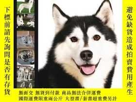 二手書博民逛書店Siberian罕見Husky (Dog Breed Exper