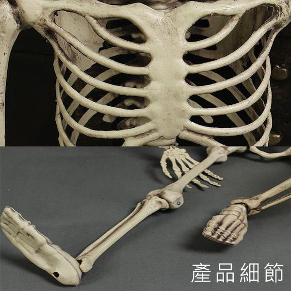 萬聖節 全身骷髏 (90cm) 造型骷髏頭 骷髏骨架 人體骷顱頭 人體模型 布置 鬼屋 整人【塔克】