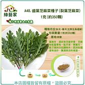 【綠藝家】A48.齒葉芝麻菜種子(裂葉芝麻菜)1克(約350顆)