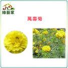 【綠藝家】H04.萬壽菊種子200顆