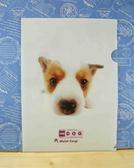 【震撼  】新大頭狗_The Dog 文件夾柯基
