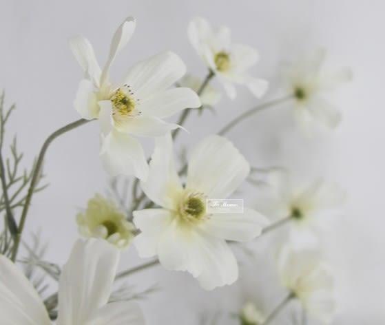 [協貿國際]白色波斯菊/仿真花絹花/高檔外貿貨/會所樣板房專用/現代歐式