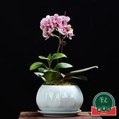 青瓷多肉蝴蝶蘭專用花盆帶托盤陶瓷綠植蘭花盆【福喜行】