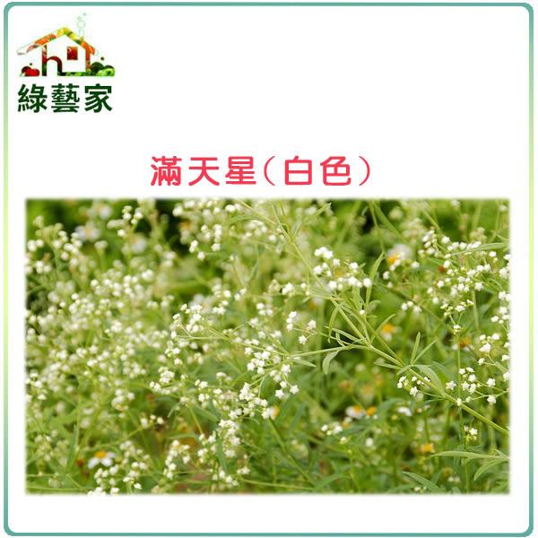 【綠藝家】H30.滿天星(白色,高60~90cm)種子0.1克(約60顆)