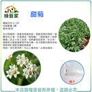 【綠藝家】K18.甜菊種子2顆