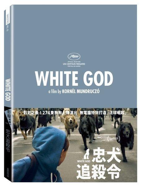 忠犬追殺令 DVD (購潮8)