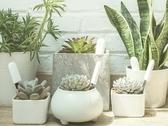 智慧花草溫度濕度土壤施肥光照檢測花花草草檢測儀植物養護  維多