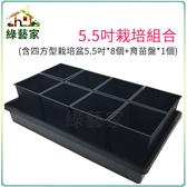 【綠藝家】5.5吋栽培組合(含四方型栽培盆5.5吋黑色*8個+育苗盤*1個)