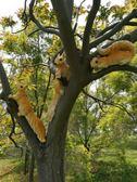 擺件品園林公園花園庭院裝飾工藝品動物雕塑樹脂仿真爬樹三只小鬆鼠擺件    古梵希
