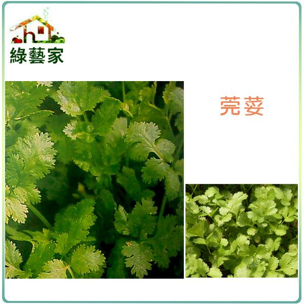 【綠藝家】F04.芫荽(香菜)種子500顆(1顆破殼後有2粒種子)