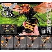小全套3款【日本正版】胡蜂 環保扭蛋 P2 扭蛋 轉蛋 造型轉蛋 環保蛋殼 昆蟲模型 BANDAI 533870A 533870B