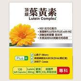 橙心 葉黃素軟膠囊(大) 120粒【德芳保健藥妝】