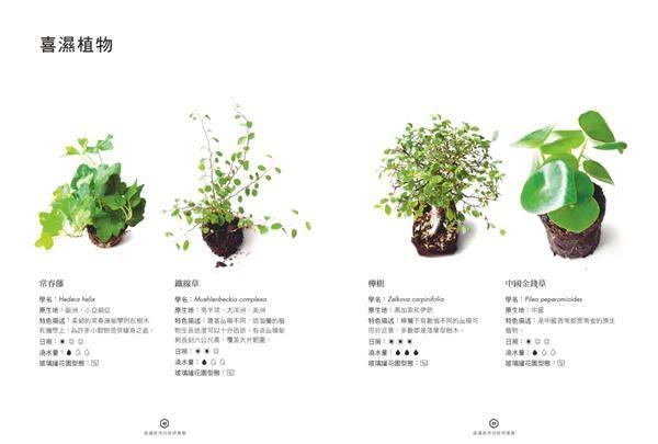 玻璃罐微境綠花園 打造自己的擬縮植物園:苔蘚‧蕨類‧多肉‧草本‧針葉‧熱帶植物