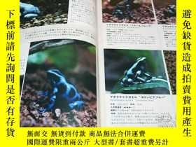 二手書博民逛書店Poison罕見Dart Frog & Paludarium Book from Japane Japanese[