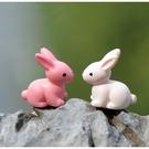 CARMO超可愛小白兔/小兔子微景觀 多肉裝飾【A022004】