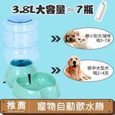 萬聖節狂歡 飲水機水壺水盆狗狗喂水喝水喂食器貓用品~