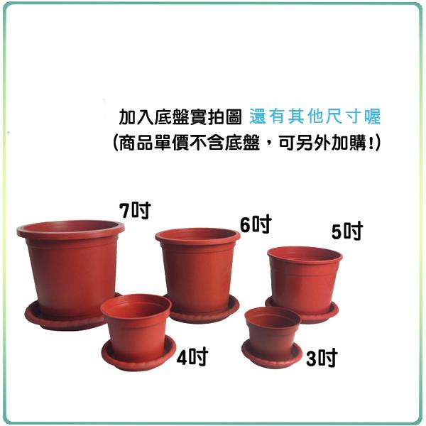 【綠藝家】3吋荷蘭盆(栽培盆)10個/組