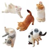 ANIMAL LIFE Baby 瑜珈貓 盒玩