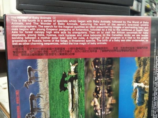 挖寶二手片-P17-164-正版DVD-其他【探索動物大百科:動物寶寶I】-Discovery(直購價)
