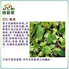 【綠藝家】K25.酸模種子300顆...
