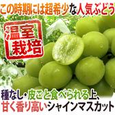 【果之蔬-全省免運】日本長野縣溫室麝香葡萄 每串約350公克±10%【1串】