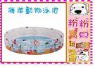 *粉粉寶貝玩具*加高加大款~親親Jilong海洋動物三環嬰兒游泳池/大海洋泳池(加大170*53公分)