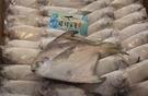 【禧福水產】印度野生白鯧魚/小肉鯧魚◇$特價249元/500g±10%/3隻◇最低價臺菜料理熱炒團購可批發