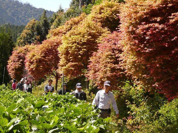 [新竹]採果體驗-雪霸休閒農場〔小藍莓、奇異果〕