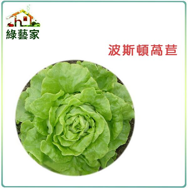 【綠藝家】A21.波斯頓萵苣種子1500顆
