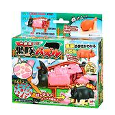 【MegaHouse】立體拼圖-買一頭豬!黑豚 黑毛豬 豬模型