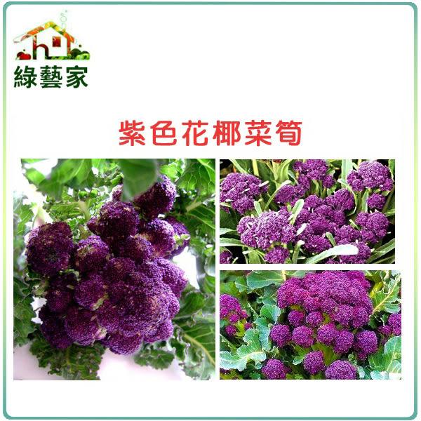 【綠藝家】B23.紫色花椰菜筍種子60顆(美國進口)