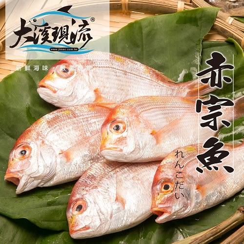 極鮮野生現撈 赤鯮魚 ( 中尾 250g±10%  尾 ) 【大溪現流】