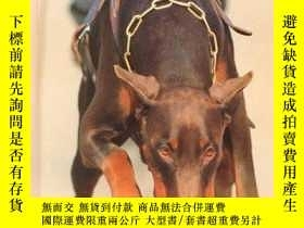 二手書博民逛書店Bomb罕見Detection Dogs (Dogs at Work)-炸彈探測犬(工作犬)Y346464 C