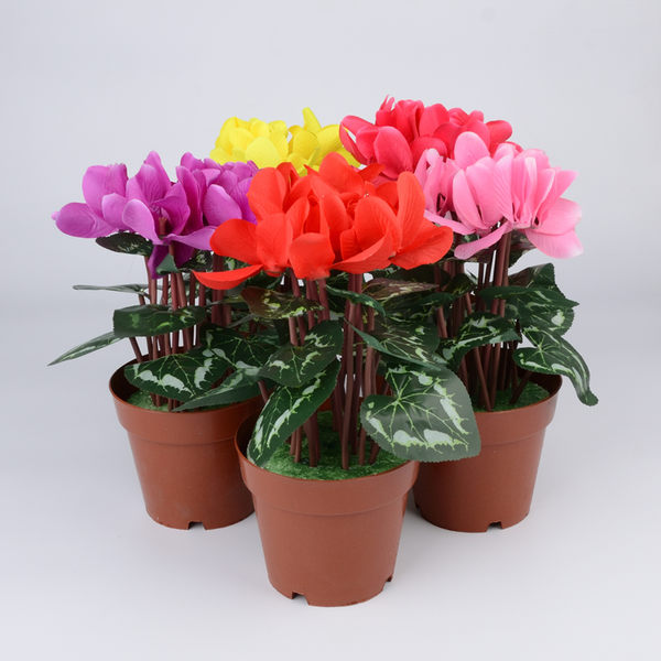 618好康又一發仿真仙客來盆栽盆景塑膠花絹花帶盆花卉假花人工人造綠植客廳裝飾