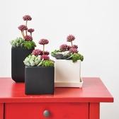仿真多肉盆栽陶瓷花盆裝飾品植物擺件art085 居享優品