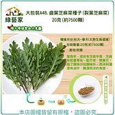 【綠藝家】大包裝A48.齒葉芝麻菜種子(裂葉芝麻菜)20克(約7500顆)