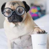 寵物眼鏡 寵物狗狗眼鏡INS同款拍照攝影道具網紅法斗巴哥柴犬英斗柯基 雲雨尚品