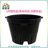 【綠藝家】1尺蘭花盆(黑吊耳盆.洋蘭吊盆)