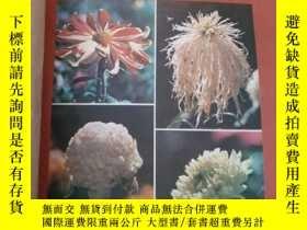 二手書博民逛書店科學畫報罕見(1983年1--12期,全年合售)Y6388 科學