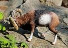 【協貿國際】野生動物恐龍模型玩具歐洲盤羊...