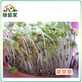 【綠藝家】大包裝蘿蔔嬰種子230克(約16000顆)(蘿蔔芽菜種子)