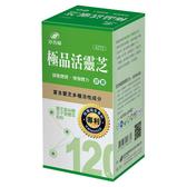 港香蘭 極品活靈芝膠囊 120粒【新高橋藥妝】