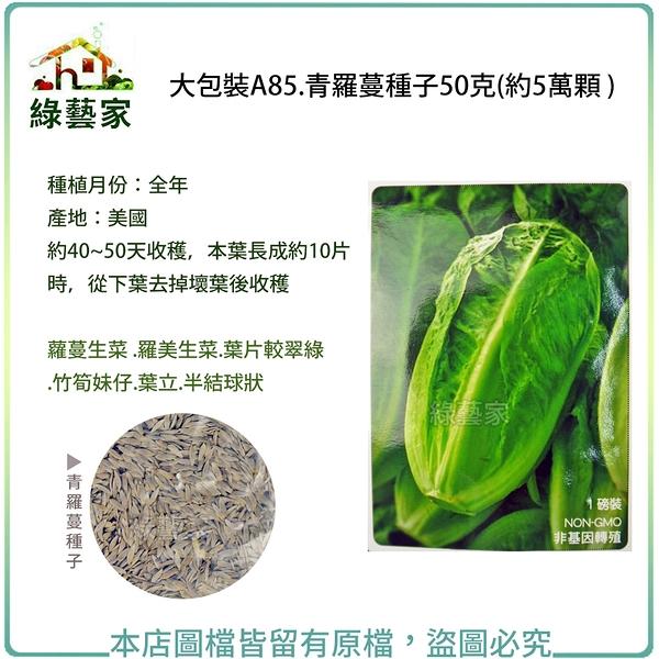 【綠藝家】大包裝A85.青羅蔓種子(青羅美生菜)50克(約5萬顆 )