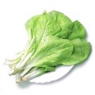 小白菜/約250g*2包★安全蔬菜...